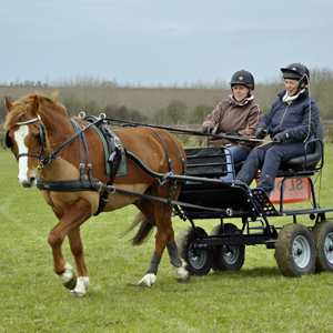 February 2013 - 'Have a go at Carriage Driving'
