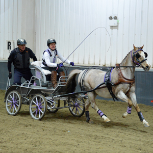 Indoor Carriage Driving Championships 2015