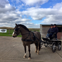 February 2017 - Joey at the Carriage Driving Camp with Team Bennington