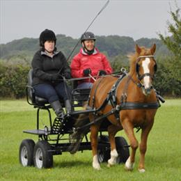 Try Carriage Driving Gallery