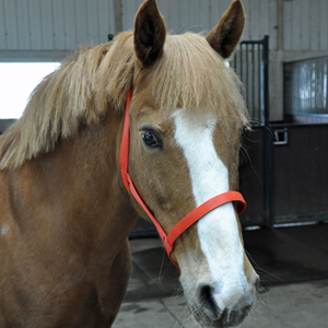 Zilco Soft Weave Coloured Underhalters